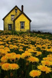 Sunflower-house-art